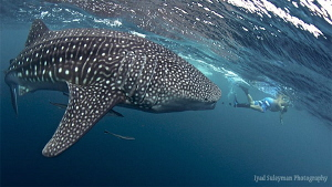 &quot;Hey, small man, go away from my way!&quot; :-)
